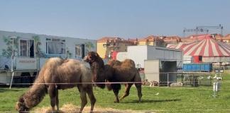 Animali Circo Romina Orfei