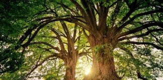 Giornata Internazionale delle Foreste