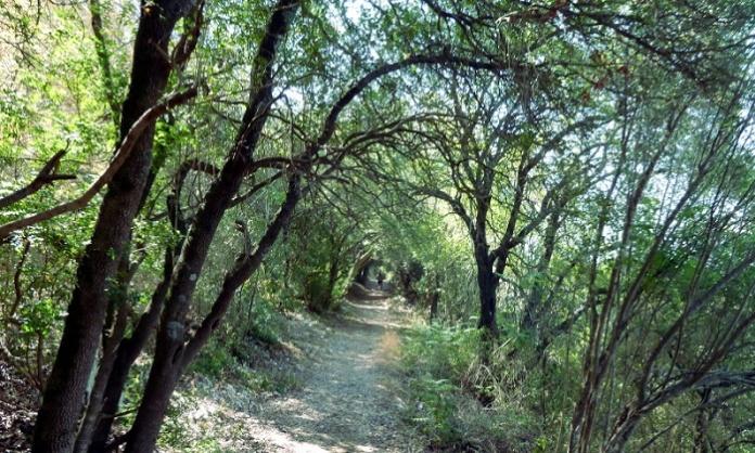 Provincia di Caserta, ok al progetto esecutivo per la messa in sicurezza e al manutenzione dei boschi