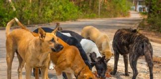 Coronavirus, emergenza randagi: raccolti oltre mille chili di cibo da distribuire a cani e gatti di Caserta e della Campania