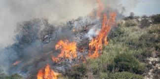 Prevenzione incendi boschivi, il sindaco di Caserta dispone le regole da seguire. Multe da 25 a 500 euro per i trasgressori