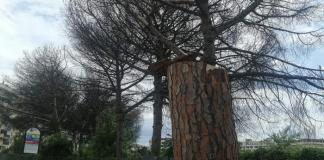 Abbattimento pini a Parco degli Aranci