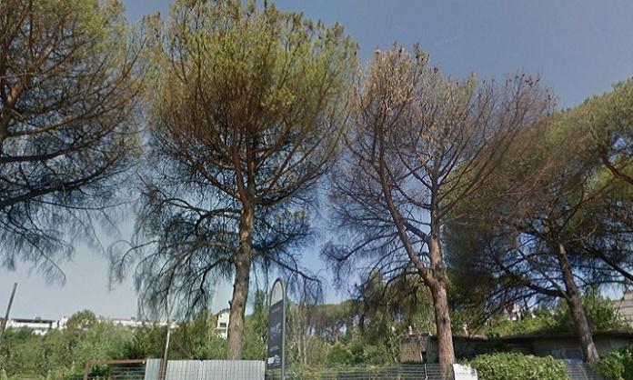 Pini Parco degli Aranci
