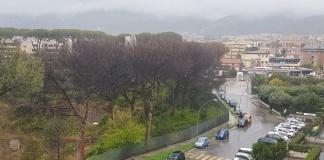Pini da abbattere a Parco degli Aranci