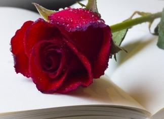 Poesia sulla rosa