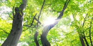 Potature e abbattimento alberi a Caserta