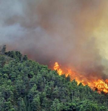 Sessa Aurunca, Punta a Fiume: Sma Campania sospende il cantiere per la campagna antincendio