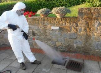 Intervento anti blatte a Caserta, disinfettanti nei tombini dal 30 luglio al 4 agosto