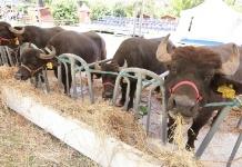 Ripresa post Covid, al Polo Fieristico A1 Expò si festeggia la bufala