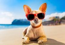 Estate 2020, cani in spiaggia: regole e diritti nel decalogo dell'Associazione Italiana Difesa Animali e Ambiente