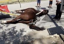 Cavallo muore di caldo mentre trasporta dei turisti nella Reggia di Caserta
