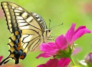 Ecosostenibilità e biodiversità, rapporto e convivenza uomo-animale nella Reggia di Caserta
