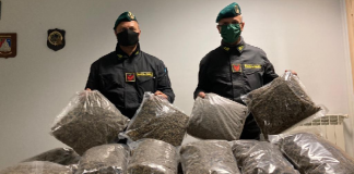Marcianise, arrestato spacciatore e sequestrati circa 17 kg di marijuana