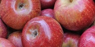 """Autunno, tempo di Mela Annurca. Storia e qualità della """"Regina delle mele"""""""