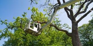 Caserta, da domani Via Gasparri sarà chiusa al traffico fino 13 novembre dalle ore 07,00 alle ore 16,00 per potatura alberi