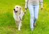 Le nuove regole per passeggiare con il cane in vigore da oggi