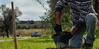 Piano di Forestazione: approvata la progettazione esecutiva per Caserta e provincia