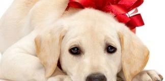 """""""Basta incentivare l'acquisto di cuccioli per Natale"""": l'Associazione Italiana Difesa Animali sul piede di guerra"""
