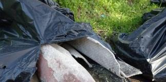 Caserta, sacchi di amianto abbandonati a pochi metri dalle abitazioni