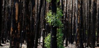 Dalla distruzione alla rinascita, Recherche di Maria Pia Latorre