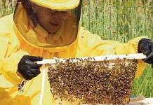 Incendio doloso distrugge un allevamento con 700mila api in provincia di Caserta