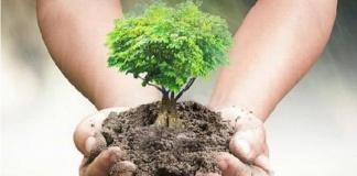 Teverola, un albero per ogni vittima del Covid: al via l'iniziativa del Comitato per le celebrazioni dei caduti in guerra