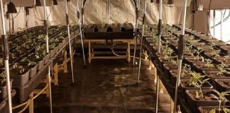 Arrestati due imprenditori agricoli trovati in possesso di un'ingente quantità di sostanze stupefacenti