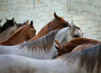 Sequestrato allevamento equino diporto-ippico per illecito sversamento di liquami zootecnici e reflui
