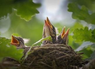 """Potature che struggono i nidi degli uccelli cittadini, l'appello dell'Oipa: """"E' vietato, denunciate ai Carabinieri Forestali"""""""