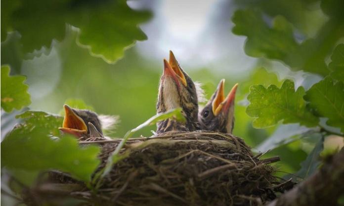 Potature che struggono i nidi degli uccelli cittadini, l'appello dell'Oipa: