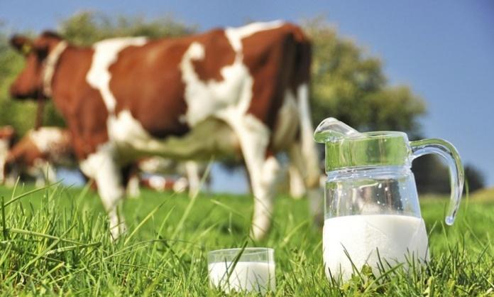 Fake news sul latte fresco, Coldiretti Campania: