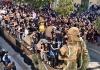 La festa di Sant'Antuono di Macerata Campania approda in Messico