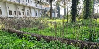 Casagiove, messa in sicurezza di alcuni alberi del parco dell'Abetaia