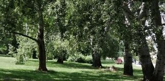 CCVIC Caserta organizza una mattina di pulizie del verde urbano ai Prati dell'area ex Saint Gobain in viale Lamberti