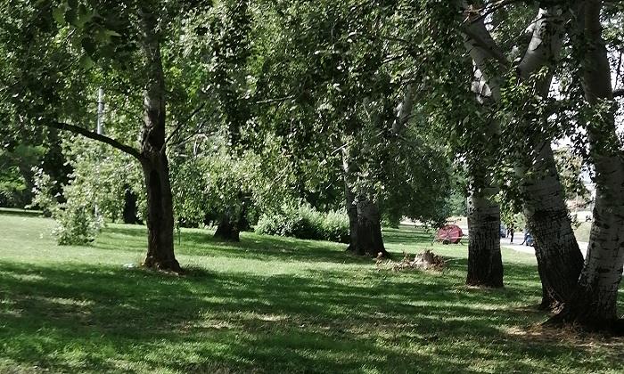 Beni comuni - CCVIC Caserta organizza una mattina di pulizie del verde  urbano dell'area ex Saint Gobain |