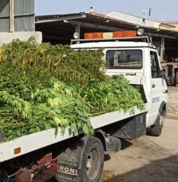Coniugi coltivano marijuana nella loro azienda agricola, arrestati dai carabinieri