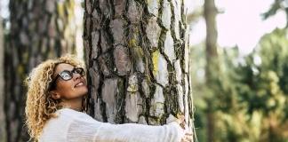 WWF Caserta, lettera aperta al Sindaco di Caserta contro l'abbattimento dei pini di via Unità Italiana